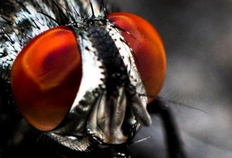El señor de las moscas reseña Golding